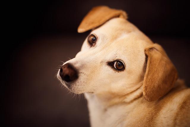 dog-3049615_640